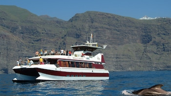 Whale & Dolphin Sightseeing Tour with Underwater Views
