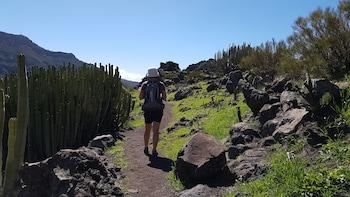 Senderismo por un Camino Real desde Santiago del Teide durante un día compl...