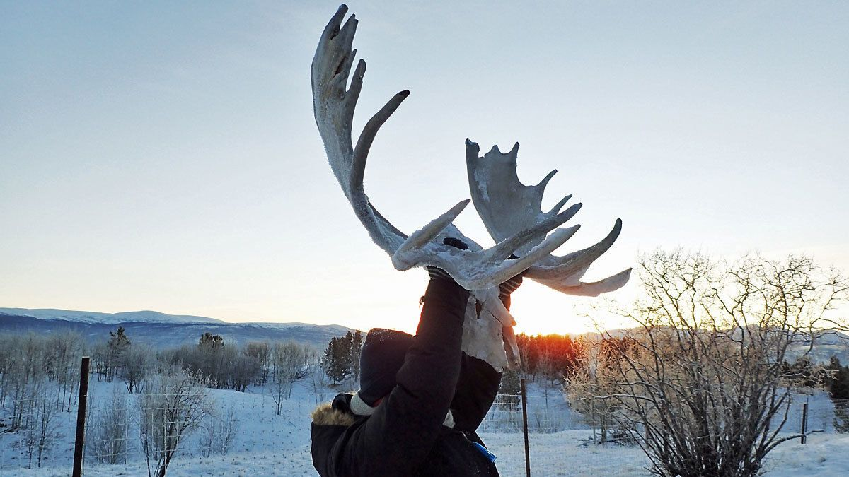 person holding antler set up in the air