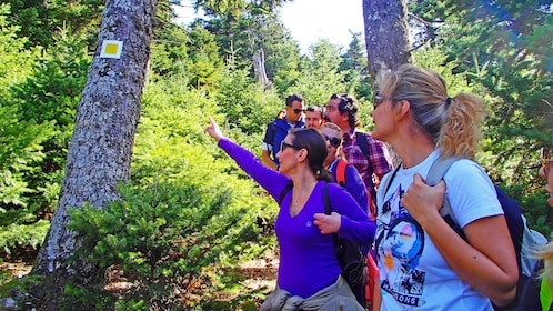 Group on a scenic Trekking trip at the National Park of Mt. Parnitha