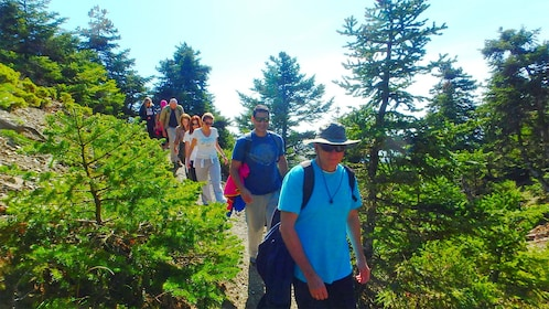 View of a group on the Trekking adventure in the National Park of Mt. Parnitha