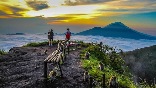hikers standing on top of the mountains with monkeys in Bali