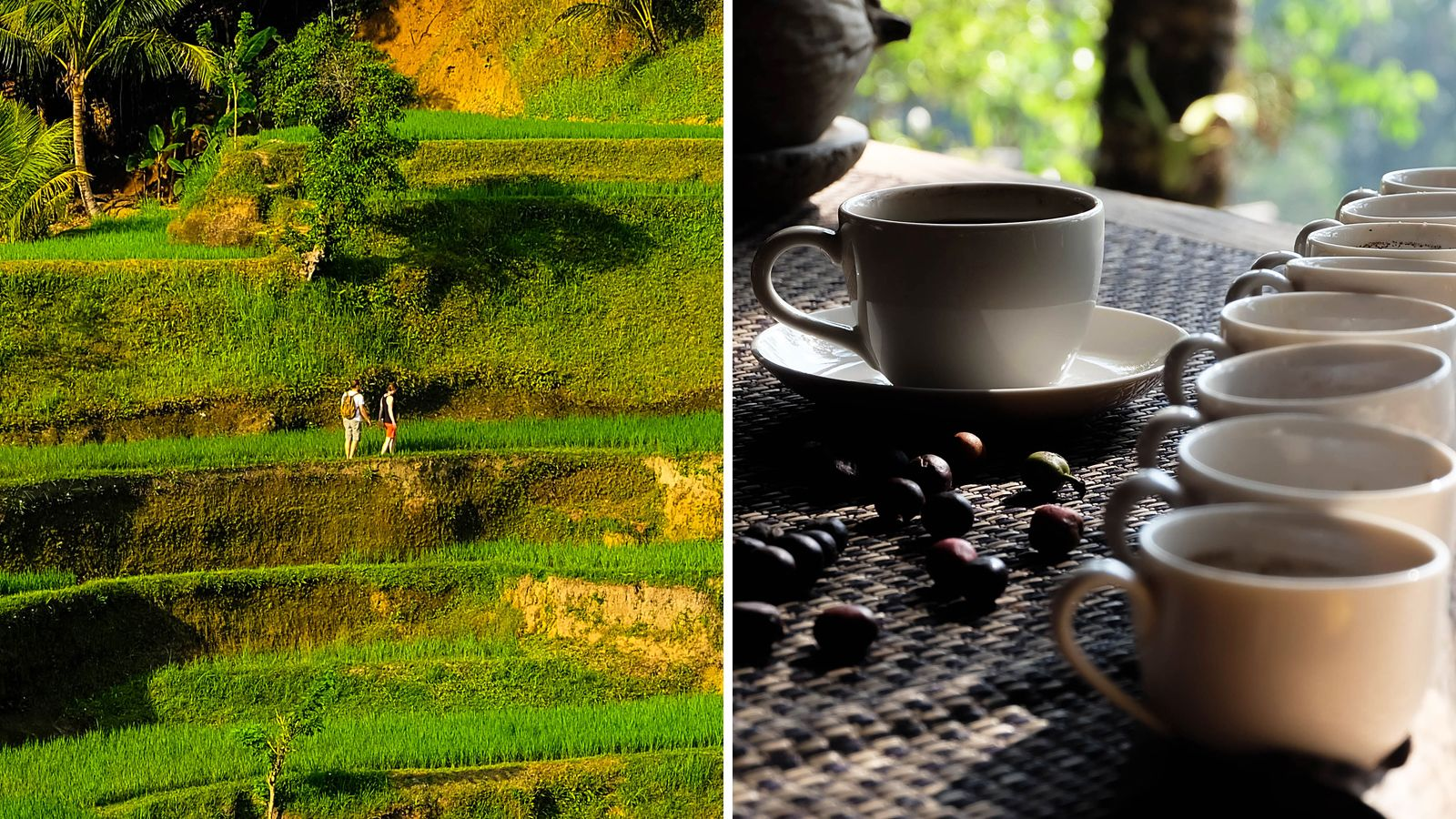 Combo image of cultural tour and coffee tasting in Bali