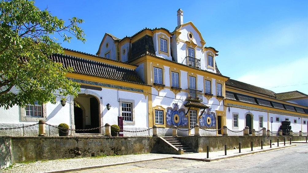 Show item 1 of 8. José Maria da Fonseca vineyard