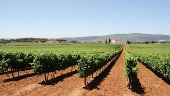 Private Day Trip & Wine Tasting in Alentejo Region