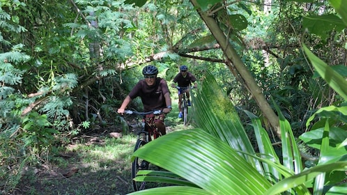 bicycling through the forest