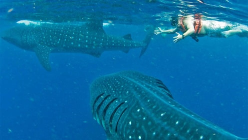 Guest on the Private Whale Shark Snorkeling Tour in Cancun, Mexico