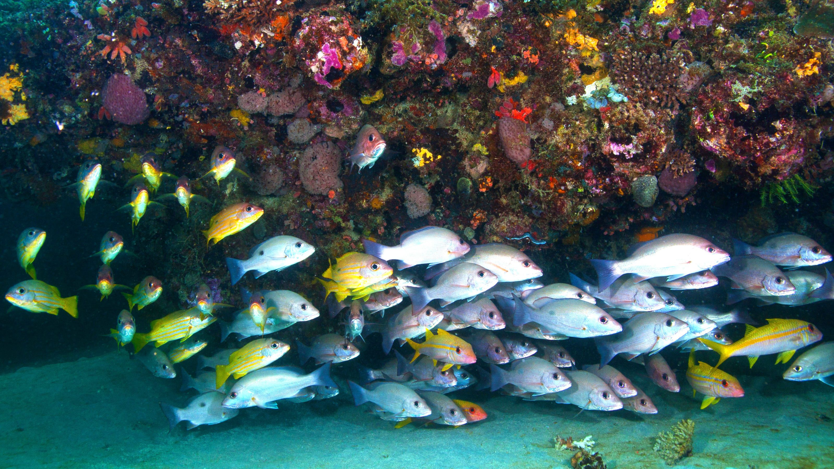 Full-Day Muiron Islands Diving & Snorkelling Tour