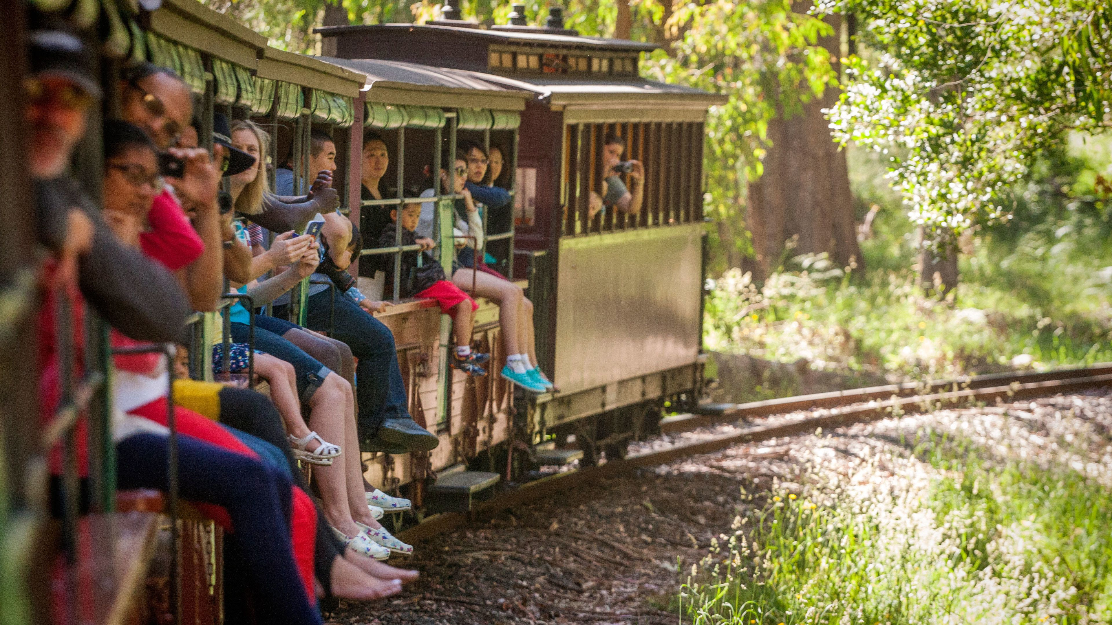 People facing outward on a train in the forest in Australia