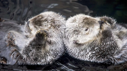 Sea otters in Lisbon