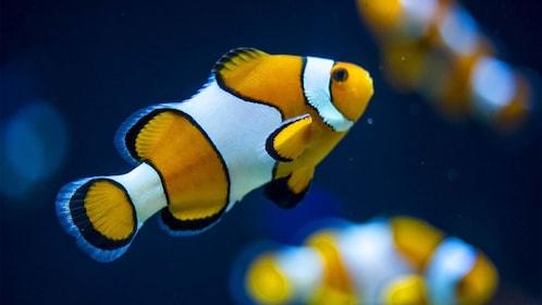 beautiful fish in Lisbon