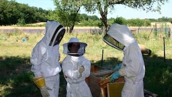 Visite d'un rucher et d'un jardin de lavande