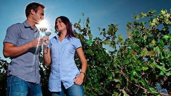 Wijnproeverij en tour door een wijnmakerij met lunch in Utiel-Requena