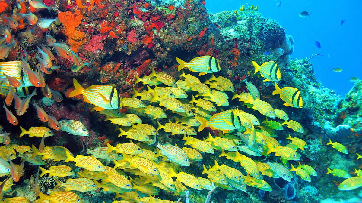 large school of fish underwater in Cancun
