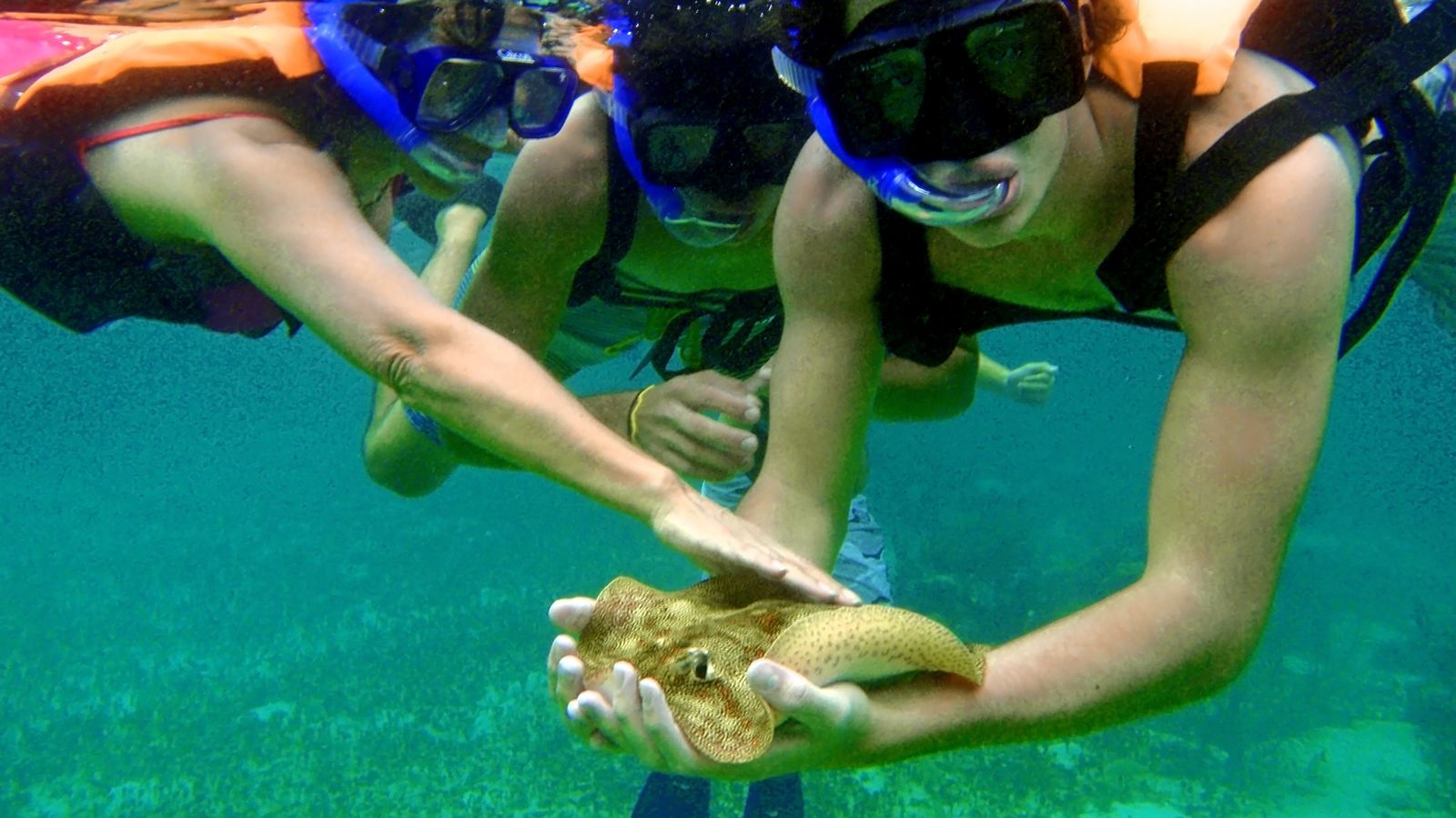 snorkelers interacting with a sting ray in Cancun