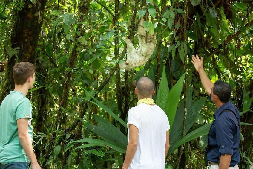 Show item 3 of 10. Bird-Watching Tour at Rainforest Adventures Park