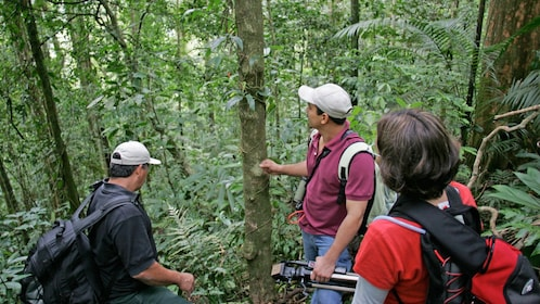 hikers navigating through the jungle in Costa Rica
