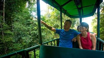 Tour guiado en teleférico por selva tropical de Costa Rica