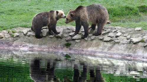 Two bears by the water at the Brown Bear Sanctuary in New York