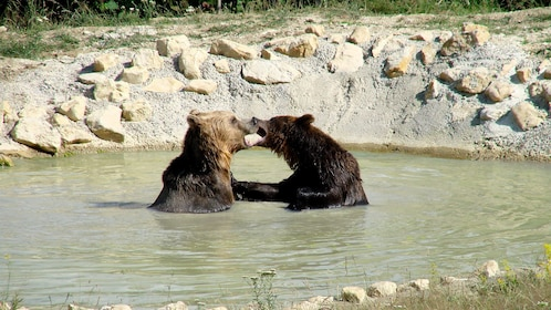 Two bears at the Brown Bear Sanctuary in New York