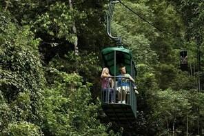 Tranopy Rainforest Sightseeing Tour