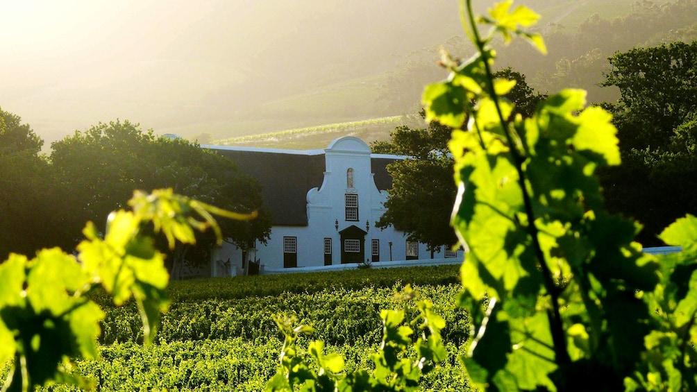 Charger l'élément 1 sur 4. Vineyard in Cape Town