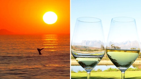Combo image of whale watching and Wine tasting in Cape Town