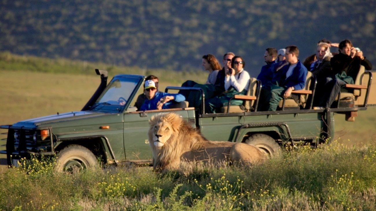 2-tägige Safari zu südafrikanischen Tieren und Wild