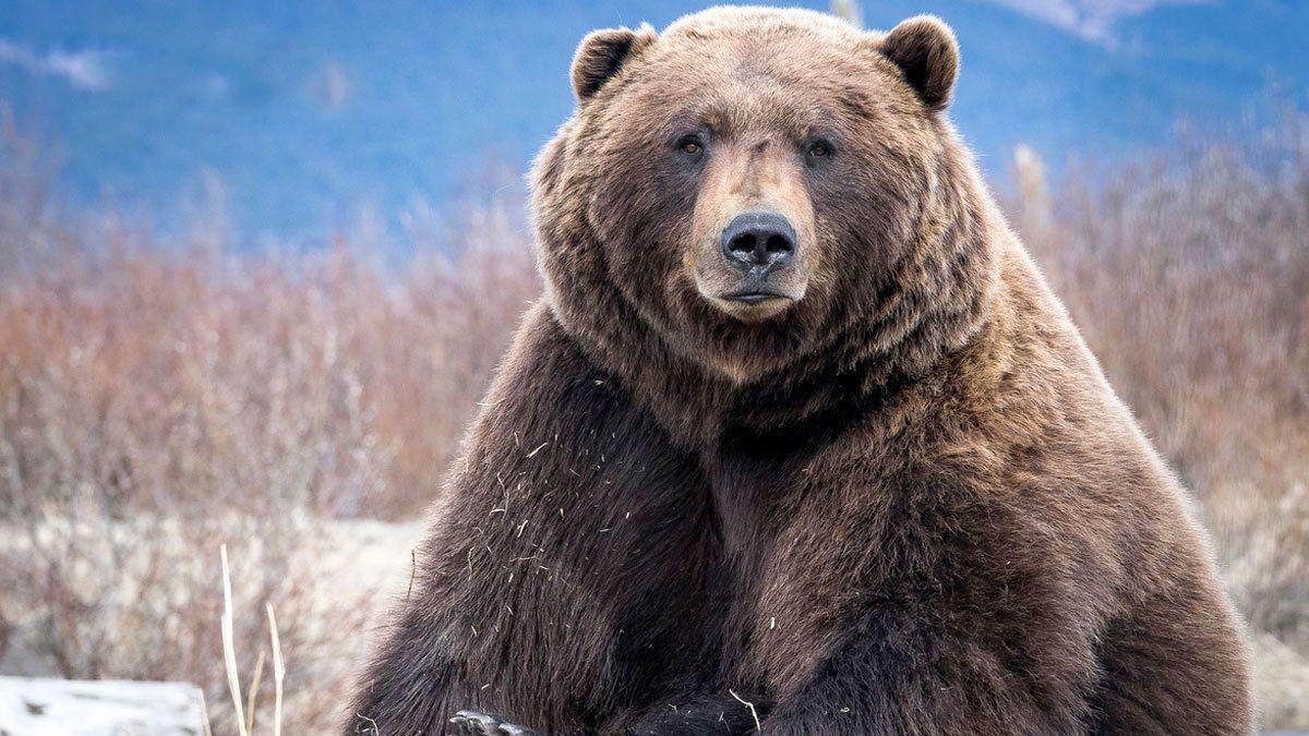 Wildlife Tour with Visit to Alaska Wildlife Conservation Center