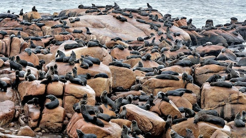 rocky beach covered in seals