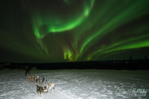 Evening Dog Sled & Aurora Viewing Tour with Dinner