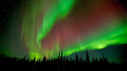 Brightly glowing Northern Lights over a forest in Fairbanks