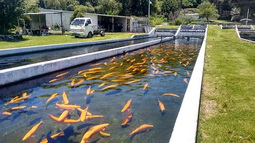 Fish hatchery seen on the Atlixco Magical Town Tour in Puebla, Mexico