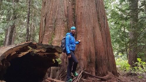 Woman poses next to enormous tree