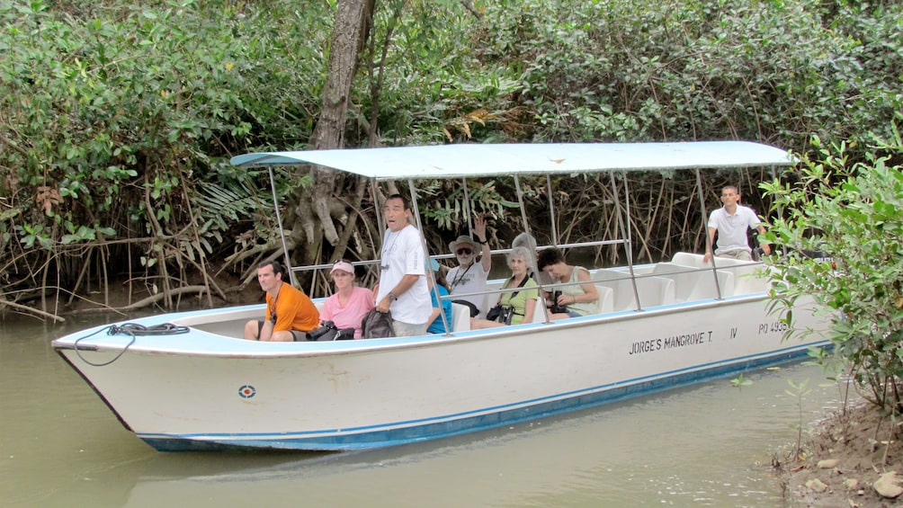 Show item 3 of 6. Damas Island Mangrove in Costa Rica