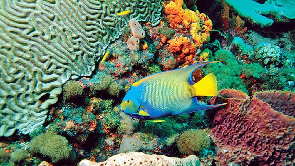 colorful fish swimming along the coral reefs in Trinidad and Tobago