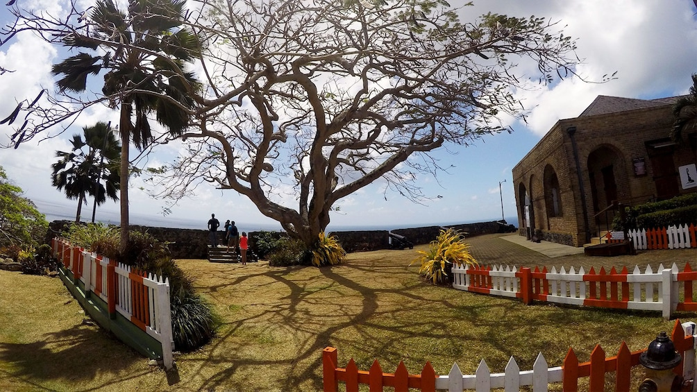 Show item 1 of 7. View of a building next to a large tree in Tobago