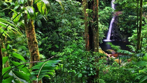 Lush forest and waterfall in Costa Rica