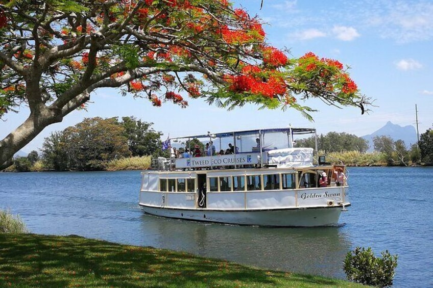 Tweed River and Rainforest lunch Cruise