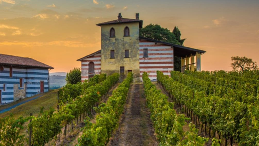 Show item 1 of 6. Italian vineyard
