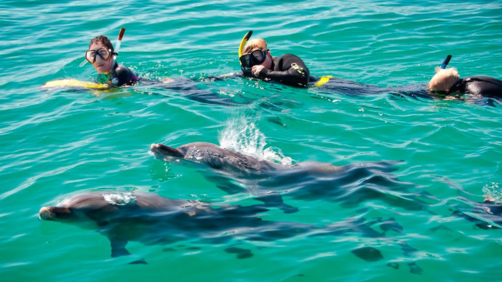 Wild Dolphin Watching & Swimming Encounter