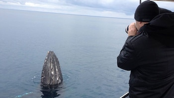 Augusta Whale-Watching Cruise on a Luxury Charter