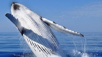 Whale-Watching Experience in Geographe Bay