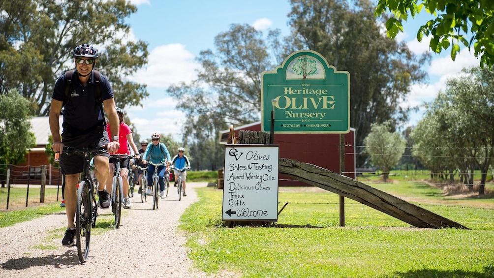 Show item 1 of 3. Heritage Olive Nursery in New South Wales Regional, NSW, Australia