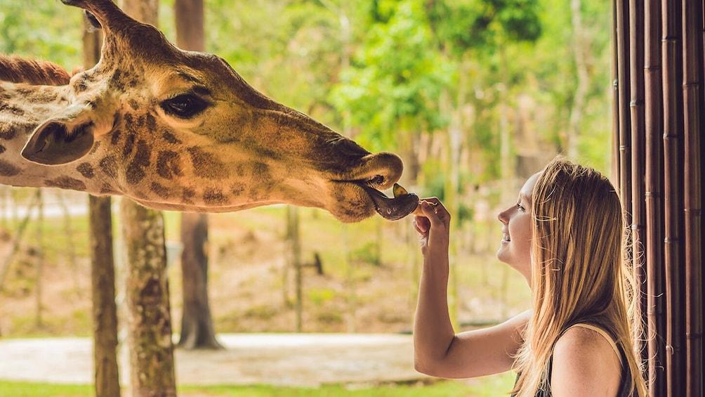 Go San Antonio Explorer pass: Choose 3 or 5 attractions