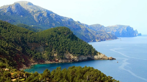 Forested coast of Mallorca island