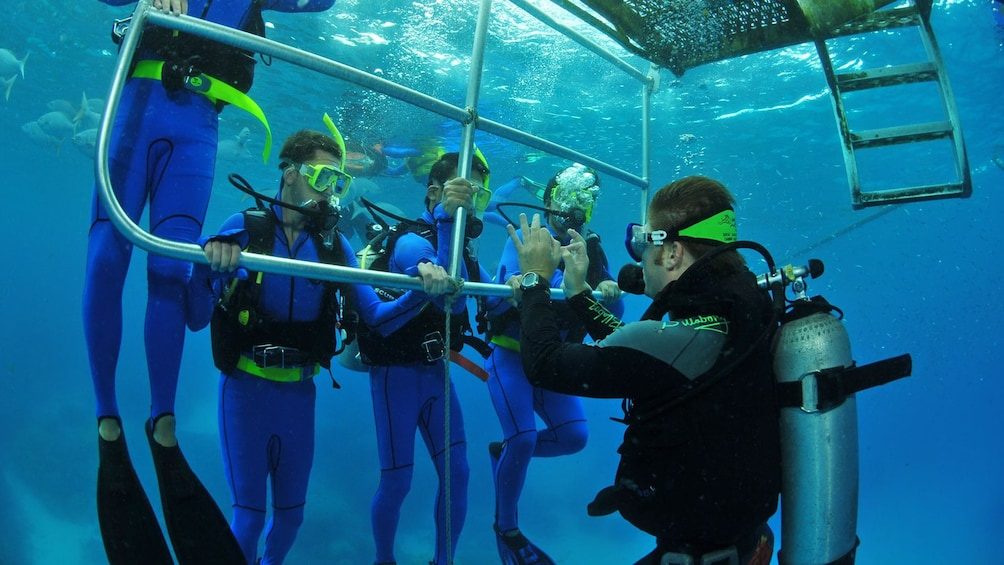 Show item 4 of 8. lead diver giving instructions underwater in Australia