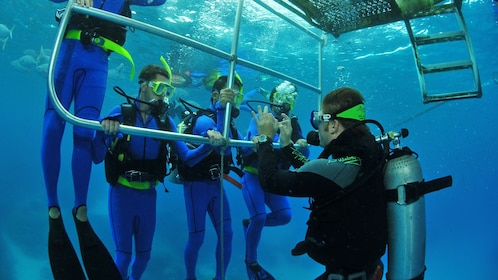 lead diver giving instructions underwater in Australia