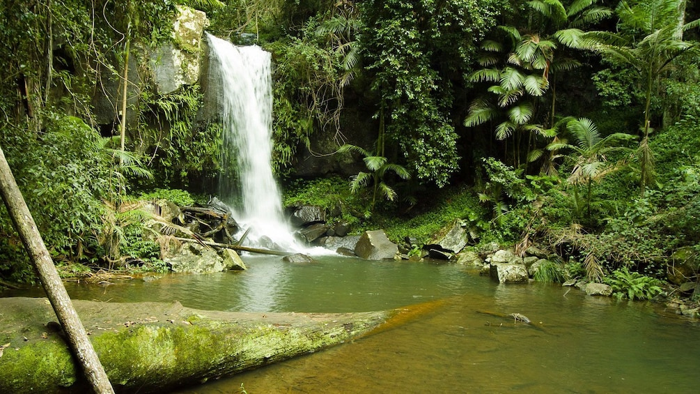 Show item 3 of 5. Waterfall in the Tamborine Rainforest