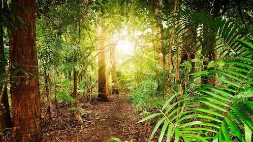 Sun shining through the trees in the Tamborine Rainforest